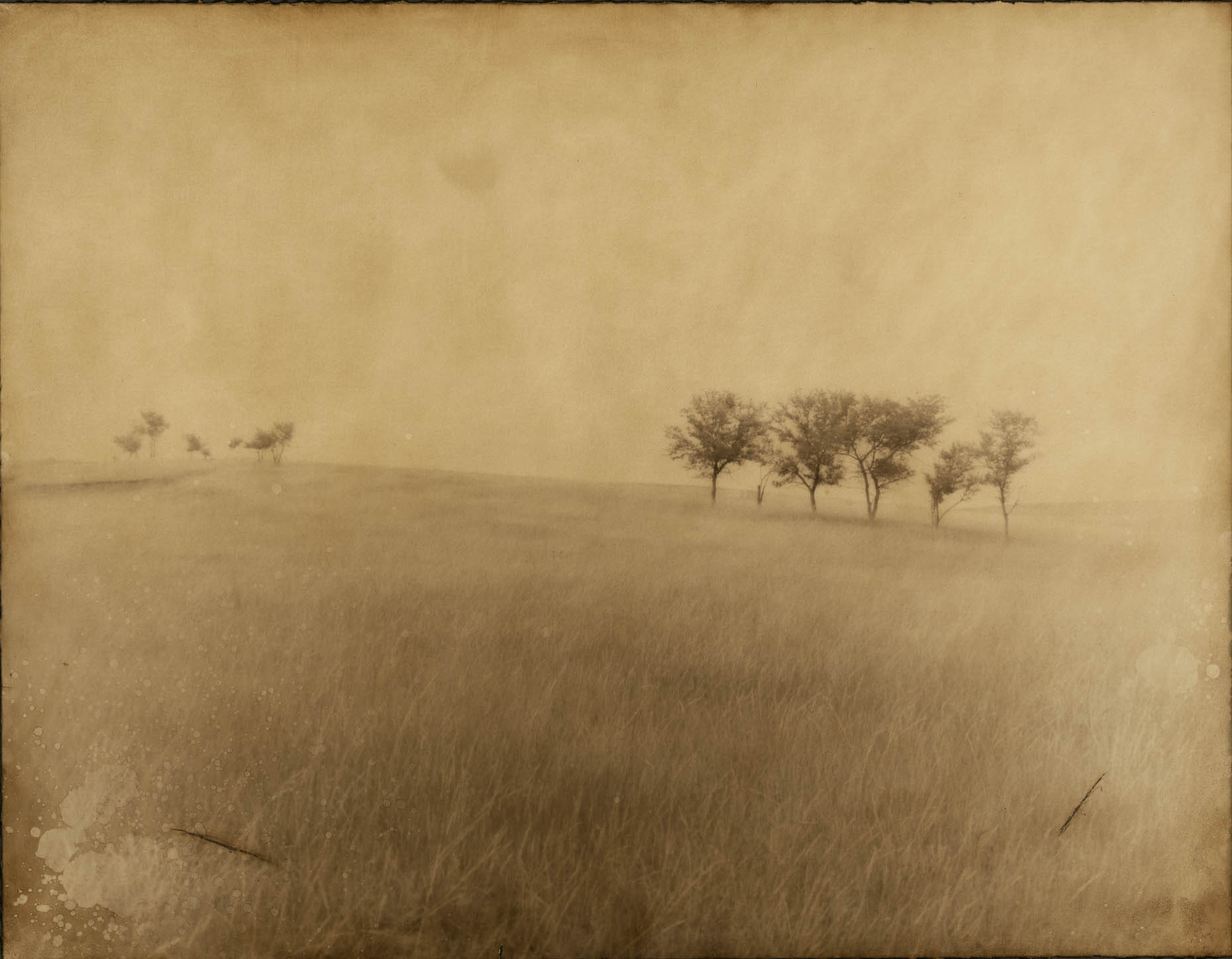 """Fourteen Trees of Wounded Knee"", South Dakota"