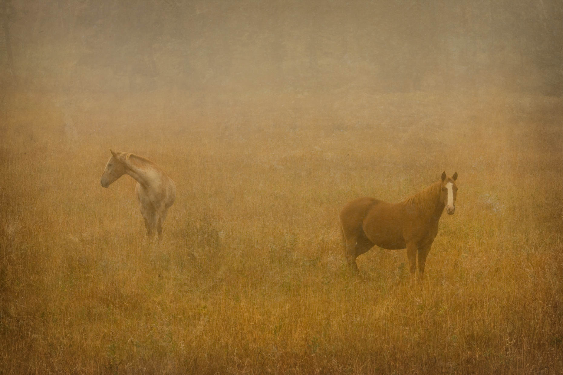 """Two Horse in Fog"", Montana"