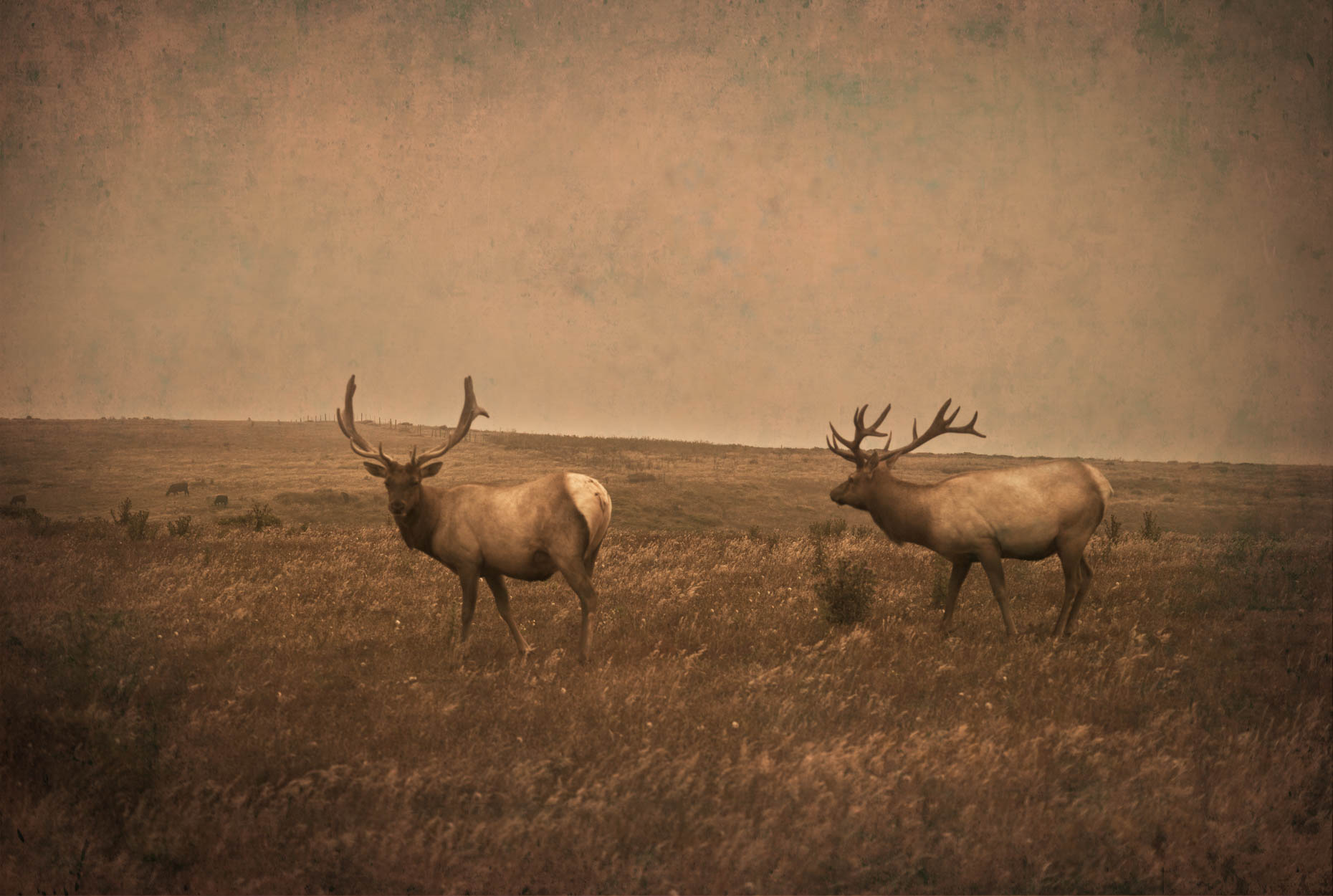 """Two Elk"", Point Reyes, California"
