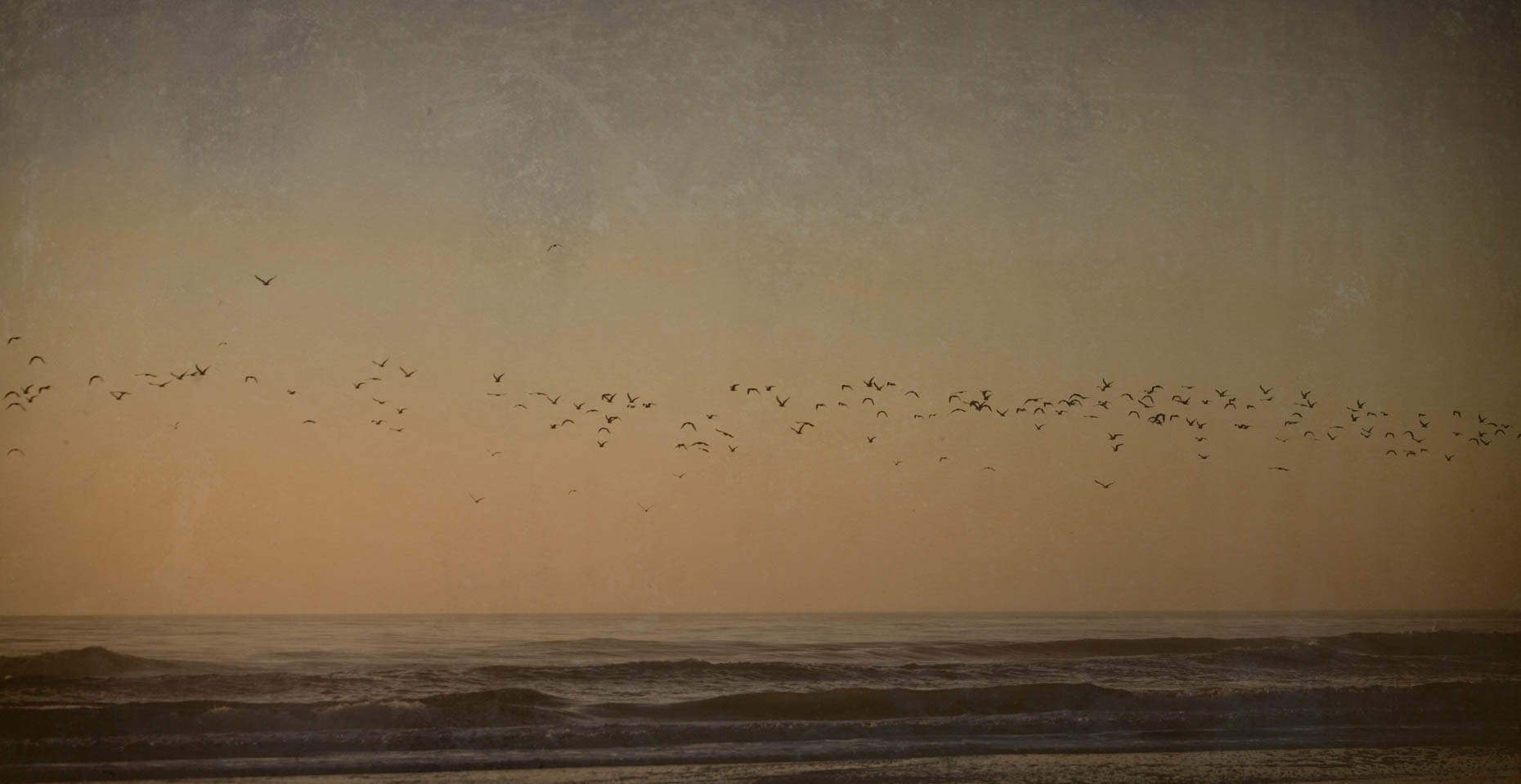 """Evening Birds"", St. Augustine, Florida"