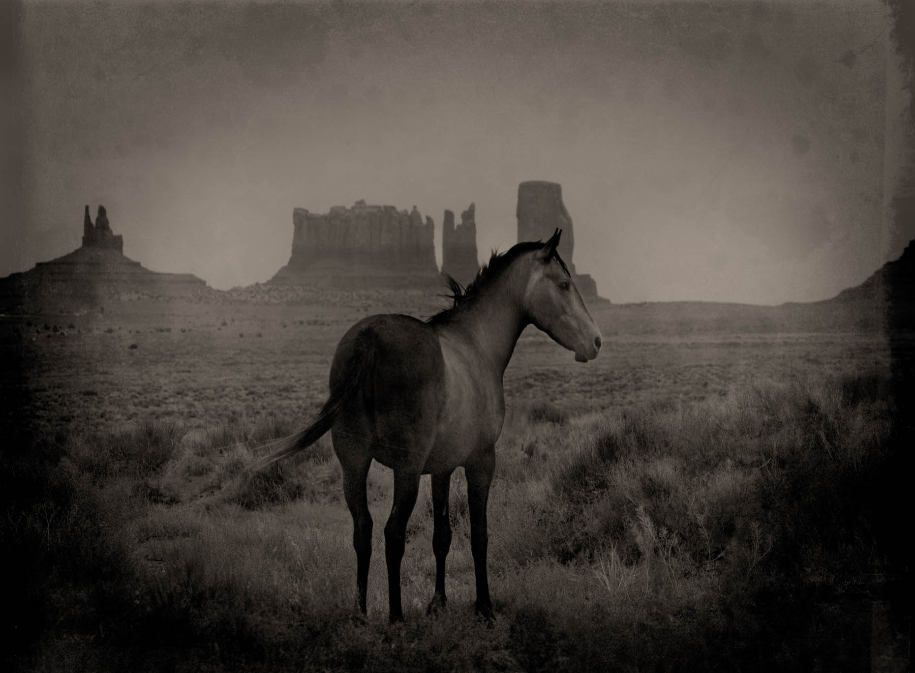 """Mustang"" Monument Valley, Utah"