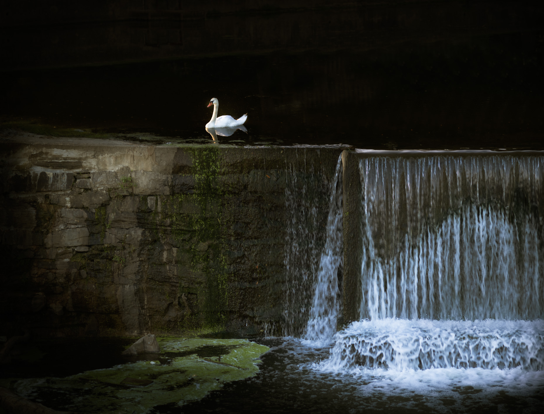 """Swan and Spillway""  Lancaster County Pennsylvania"