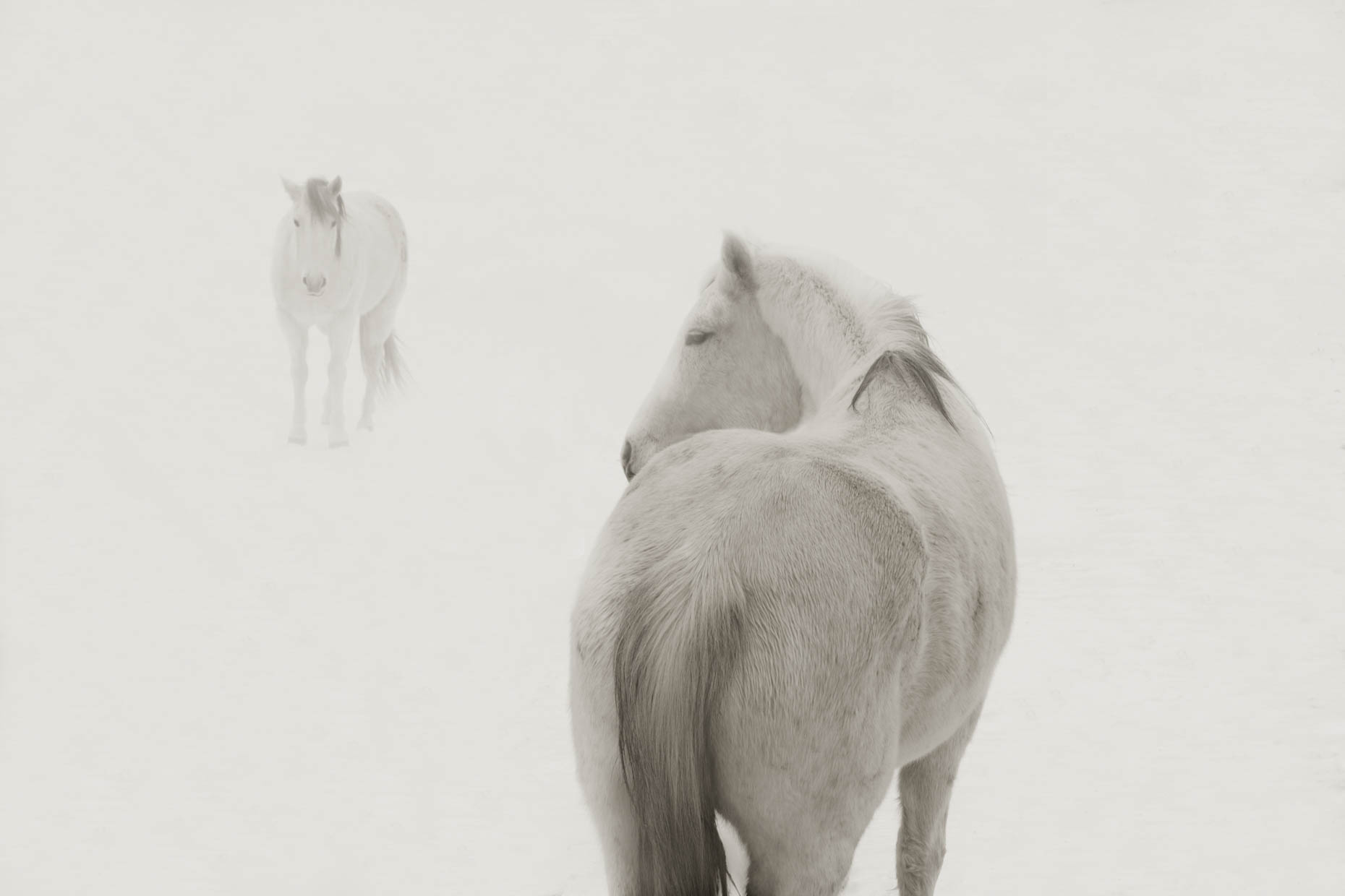 """Snow Ponies 2"", Truchas, New Mexico"