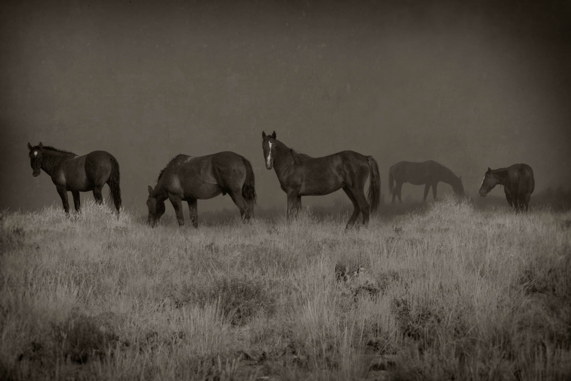 """Wild Horses"", Green River, Wyoming"