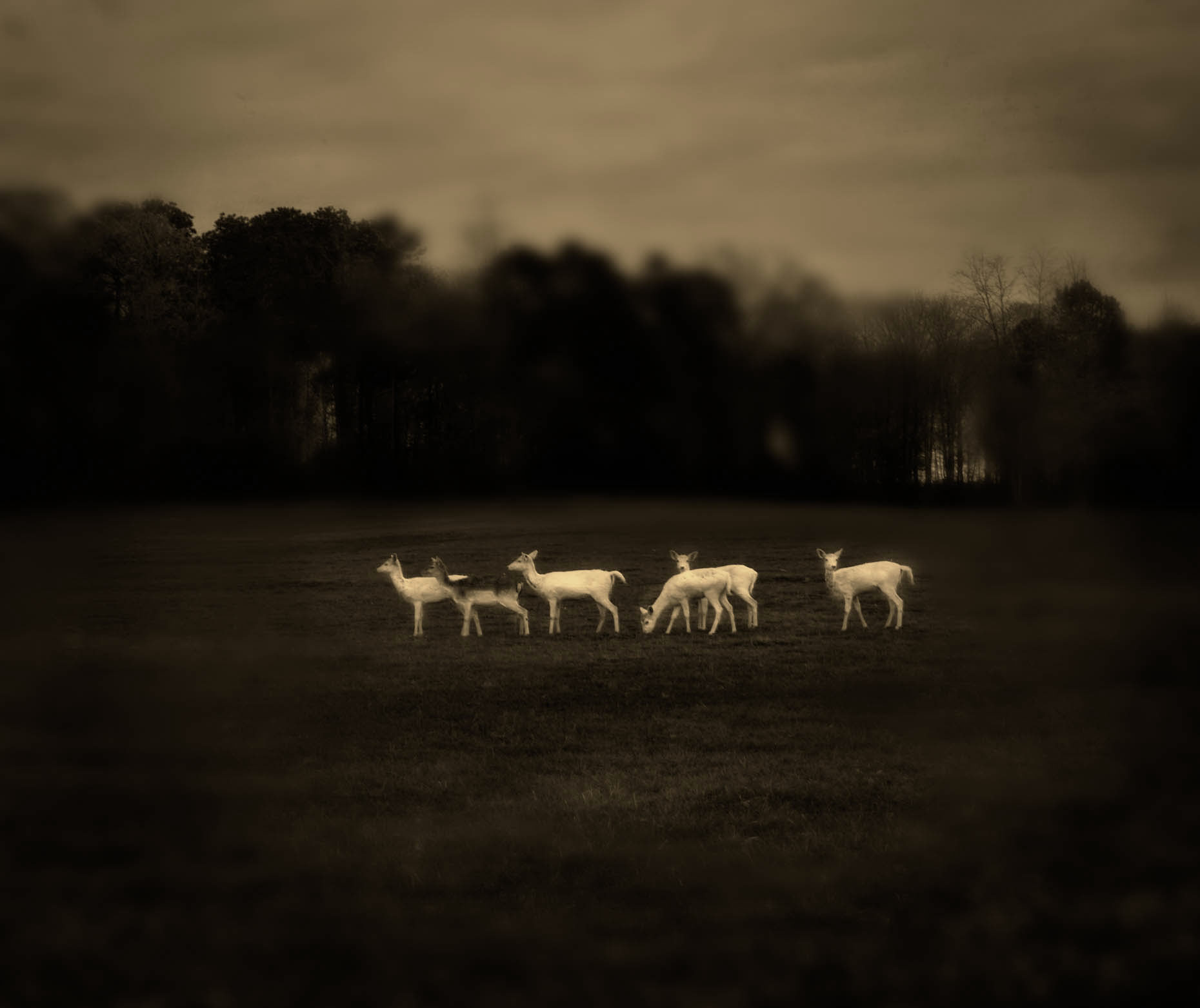 """White Deer"", Louisiana"