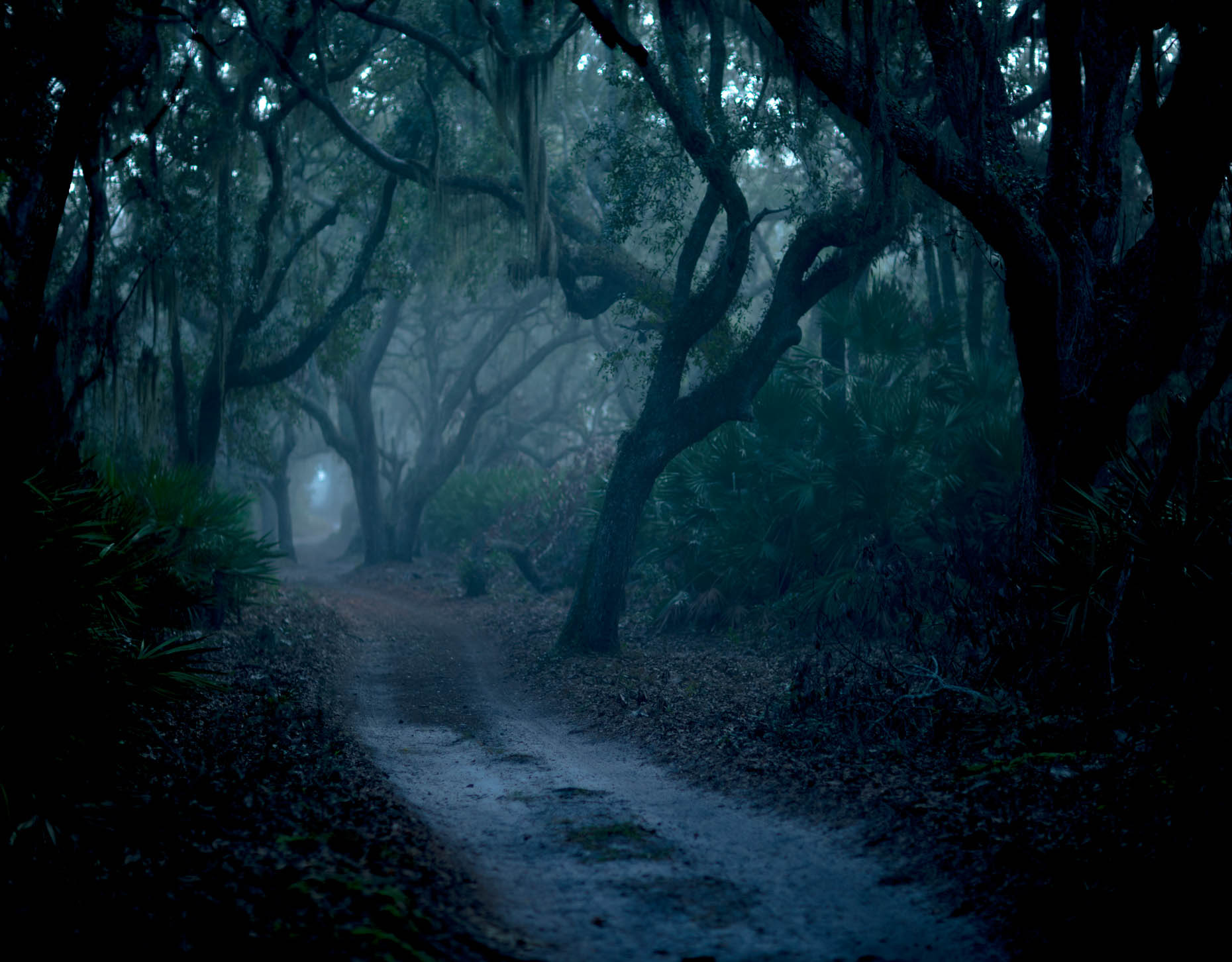 """Blue Road"", Cumberland Island, Georgia"