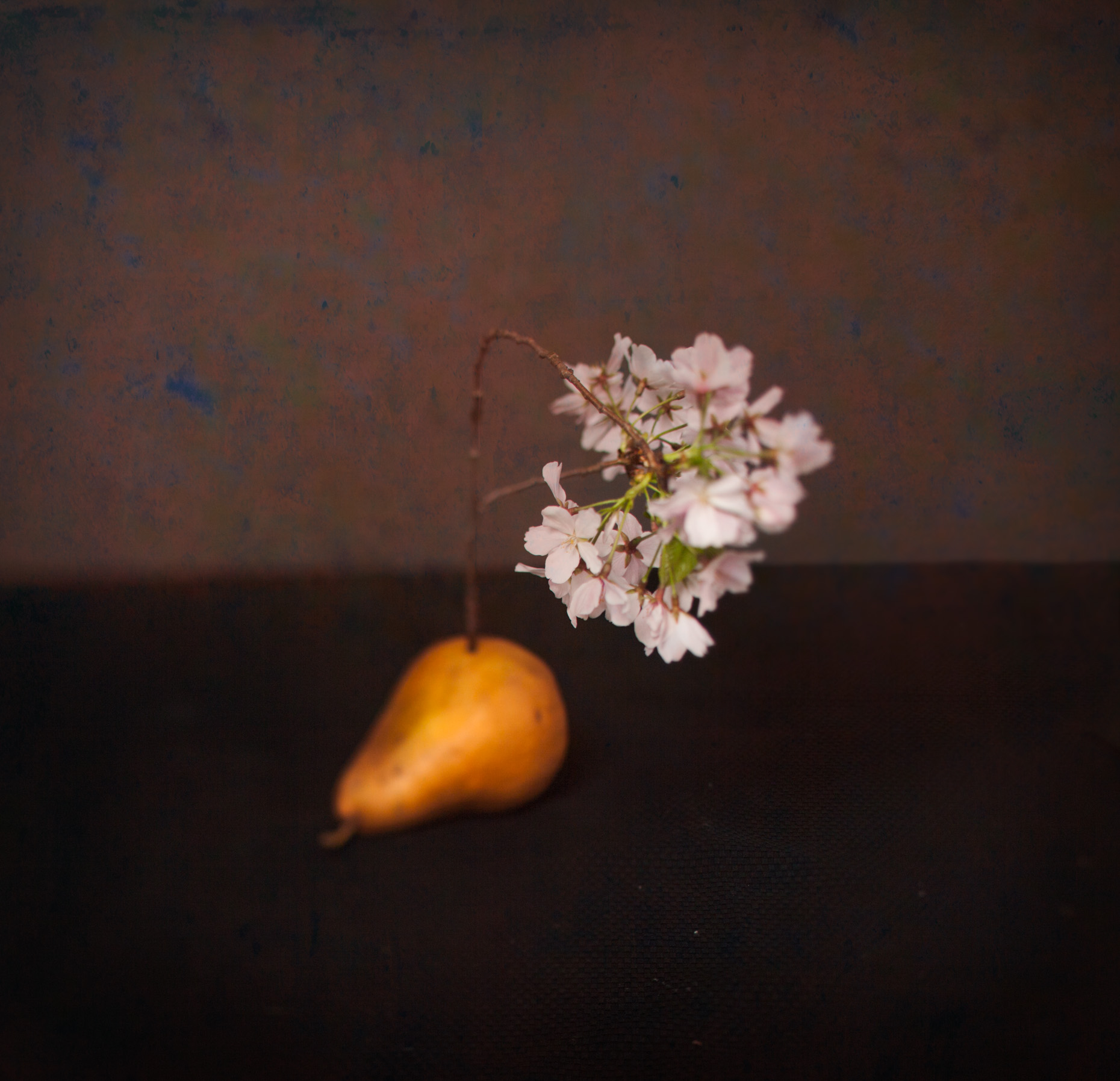 cherry flowers-pear