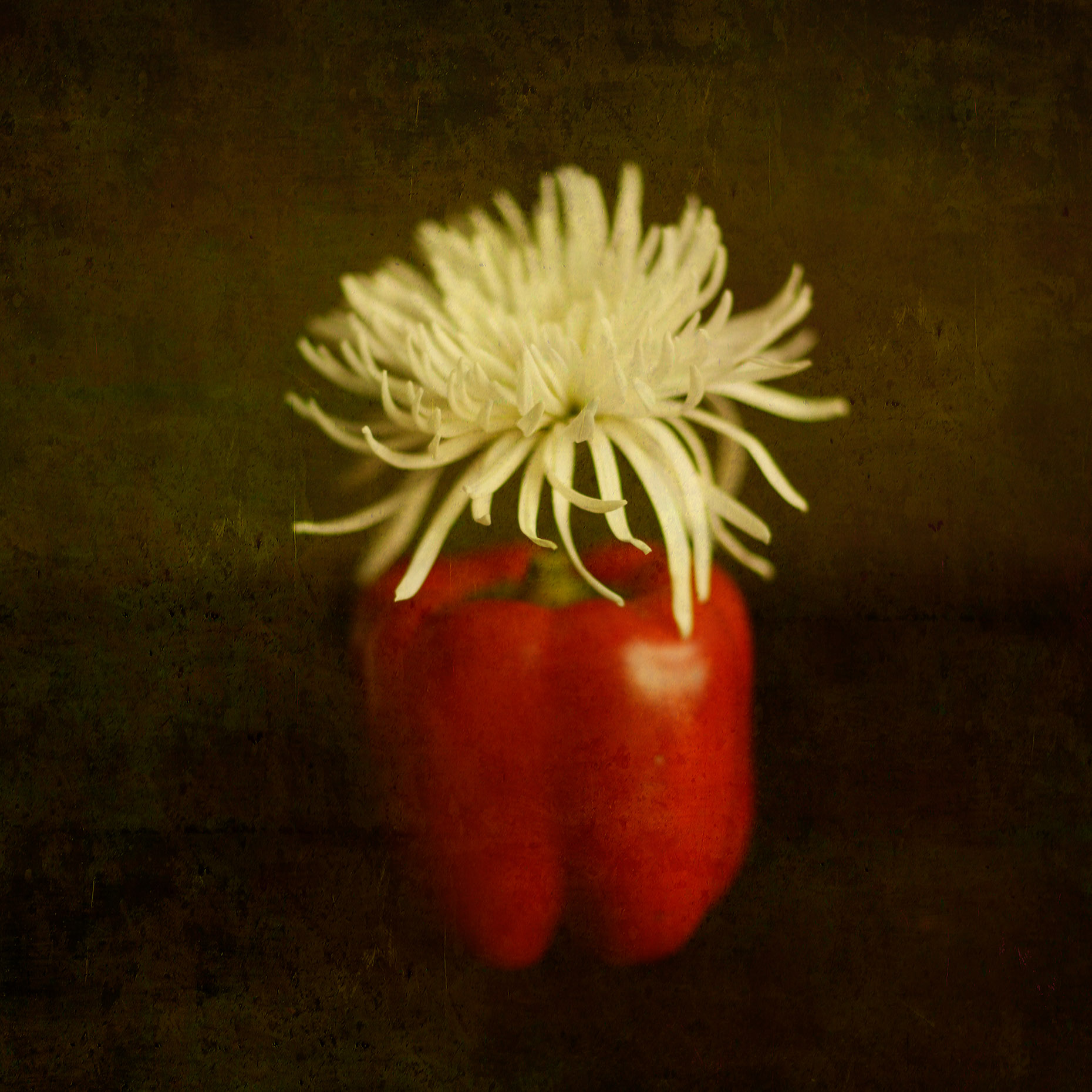 Chrysanthemum Pepper