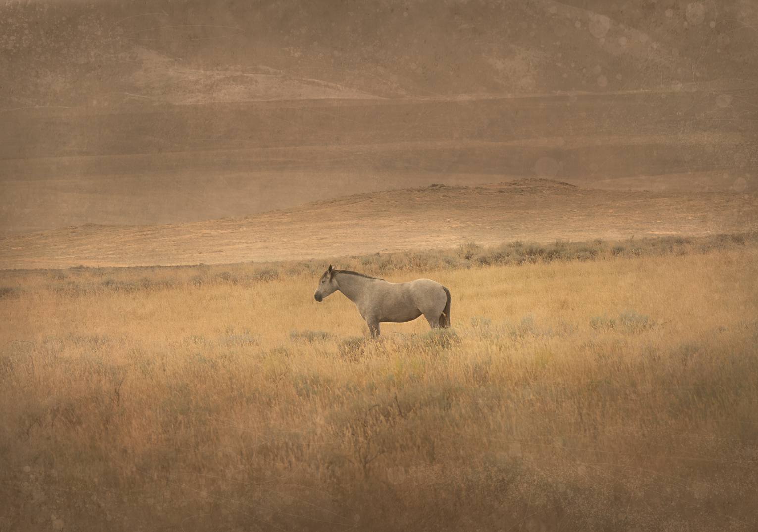 Gray Horse, Idaho