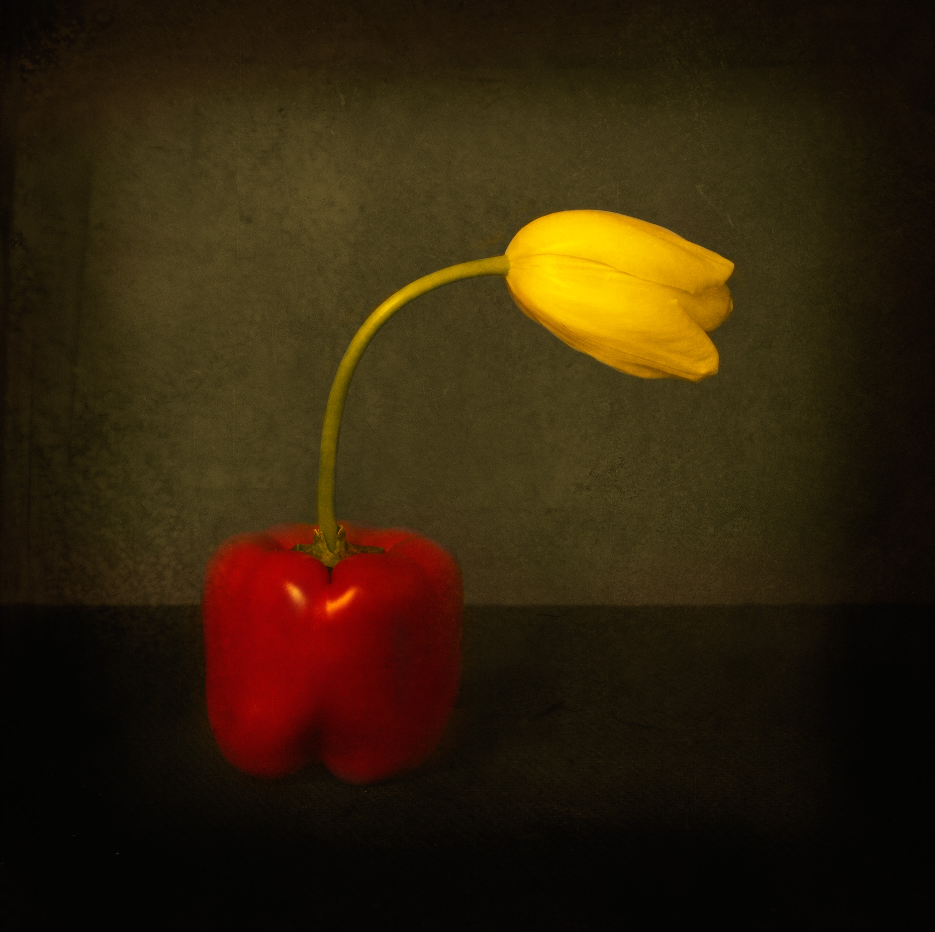 Pepper Tulip