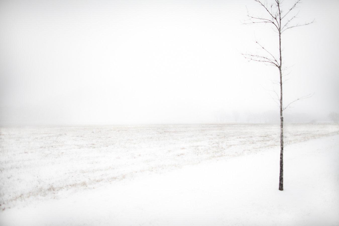 """Snow Tree"", 2009, Williamson County, Tennessee"
